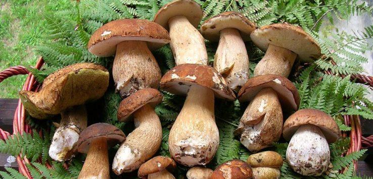 Sagra del Fungo dell'Etna Pedara